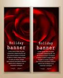 Rose banner design vector