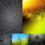 Dewy Spider Web vector