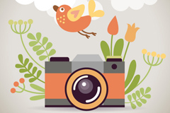 Cartoon cameras and flowers vector