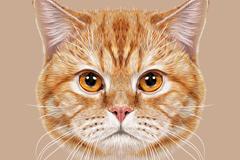 Realistic Cat Head vector