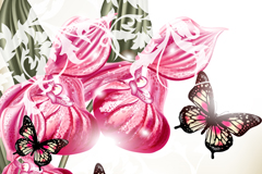 Beautiful orchids and Butterfly vector