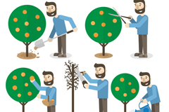 5 care of fruit trees gardener vector diagrams