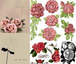 Roses design vector