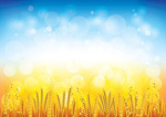 The wheat background vector