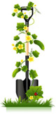 Cucumber seedling and shovels vector
