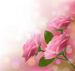 Fantasy pink roses vector