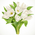 White tulips bouquet vector