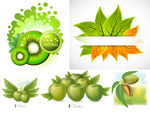 Kiwi fruit and Green Apple vector