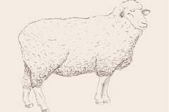 Hand-painted docile sheep, vector