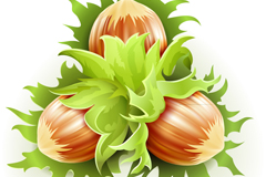 4 fresh hazelnut design vector