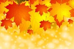 Autumn fantasy Maple Leaf Chinese Restaurant background vector