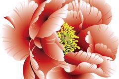 Beautiful peony flowers vector