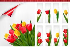 Beautiful Tulip card vector