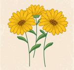 Beautiful yellow daisies vector