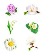 Floral flower design vector