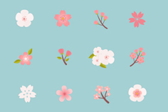 16 beautiful cherry blossom icon vector