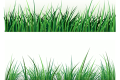 2 green grass design vector graph