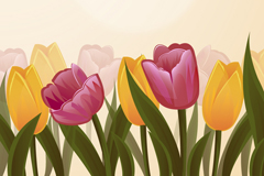 Beautiful Tulip flowers vector