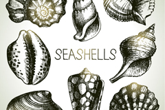 8 hand-painted shells design vector