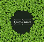Green leaf border vector